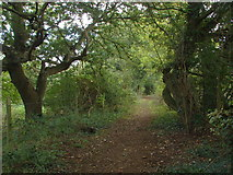 TQ0382 : The Beeches Way by Alan Hunt
