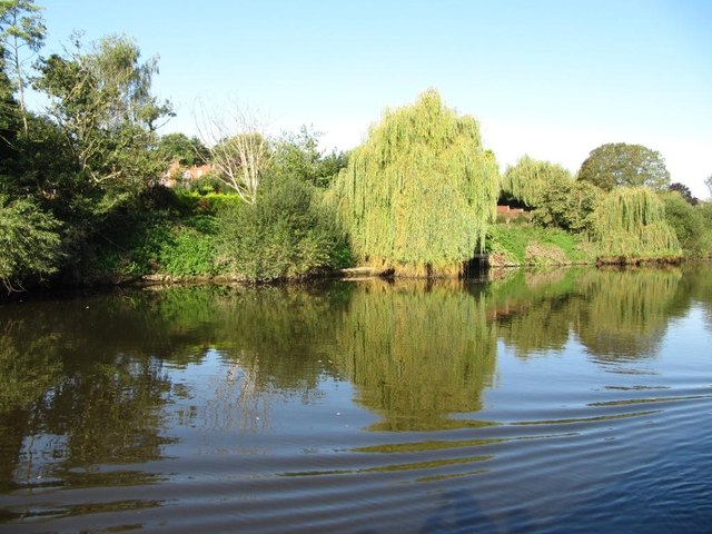 Weeping willows on the west bank of the Severn