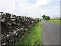 NY6166 : Hadrians Wall by Chris McAuley