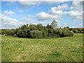 TM1797 : Overgrown pond north of Marsh Lane by Evelyn Simak