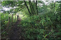 SE2332 : Alternative footpath east of Acres Hall, Pudsey by Richard Kay