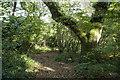 SW4425 : Bridlepath through Trevelloe Woods (2) by Elizabeth Scott