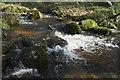 SW4425 : Little cascade in Trevelloe Woods by Elizabeth Scott