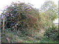 TM4184 : Footpath off Redisham Road by Adrian Cable