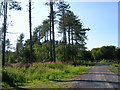 SN4001 : Wales Coast Path in Pembrey Forest by Simon Mortimer