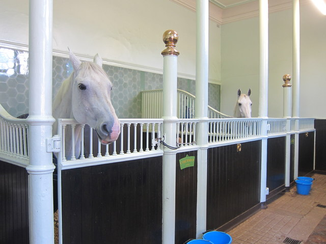 Horses at the Royal Mews