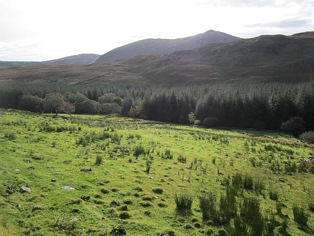 Forest edge, Bluestacks Mountains