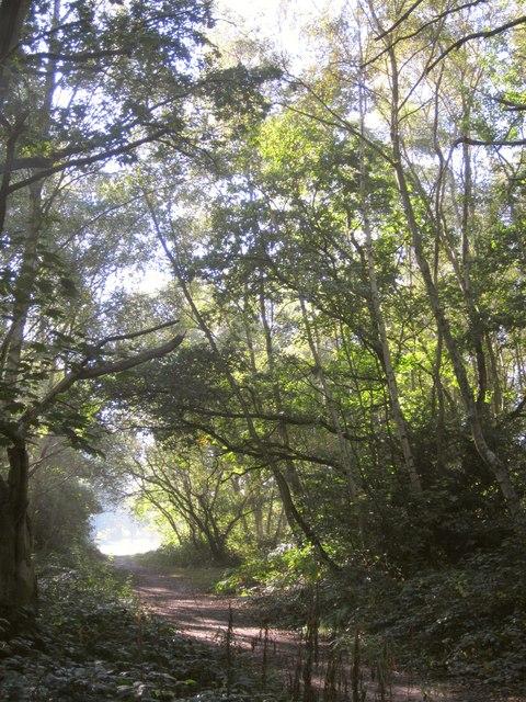 Path on Putney Heath
