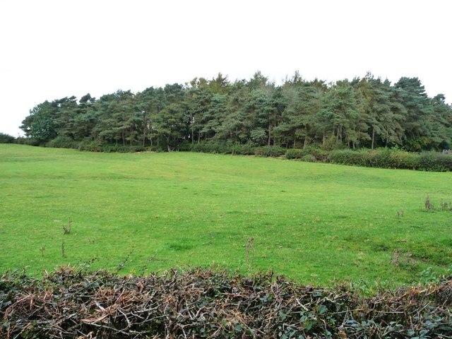 Blackbrook Spinney