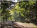 TQ2272 : Windmill Ride, Wimbledon Common by Derek Harper