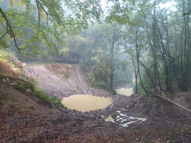 Muddy pools in Roundhill Wood