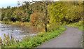 J3470 : Autumn colours, Lagan towpath, Belfast by Albert Bridge