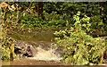 J3470 : Overflowing path, Belvoir forest, Belfast by Albert Bridge