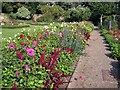 SX9063 : Dahlia bed in Torre Abbey Gardens by Richard Dorrell