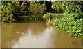J3369 : The flooded Lagan canal at Moreland's Meadow, Belfast by Albert Bridge