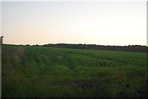 TG1607 : Farmland by Little Melton by N Chadwick