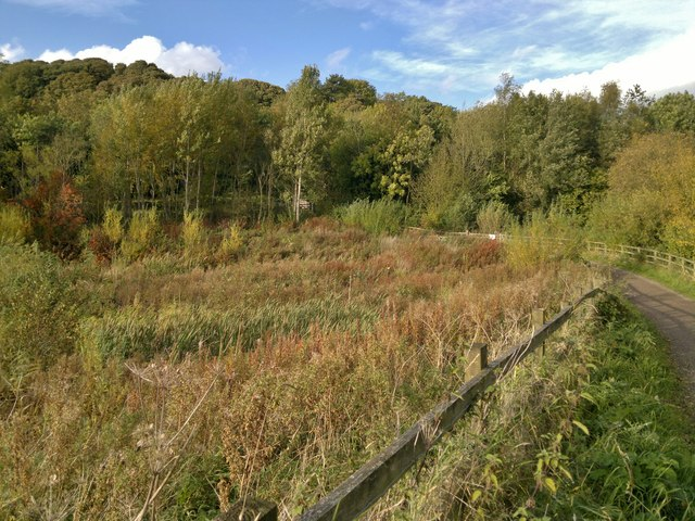 Reed beds at head of Carsington Water reservoir