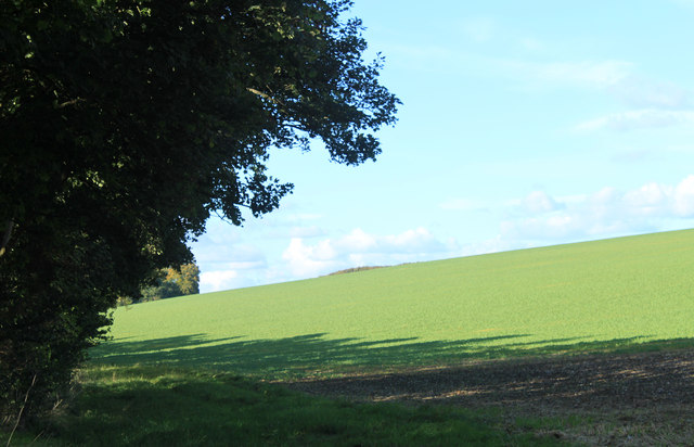 2012 : Field north of the A362