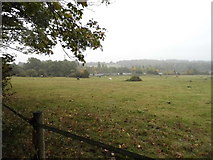 TQ1663 : Fields on Barwell Court Farm, Claygate by David Howard