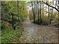 NS5577 : Path junction, Mugdock Country Park by Jim Barton