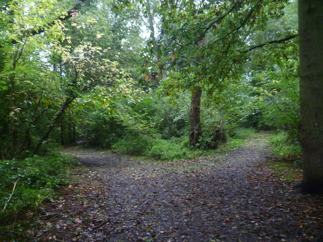 Diverging Paths In Well Wood 169 Marathon Cc By Sa 2 0