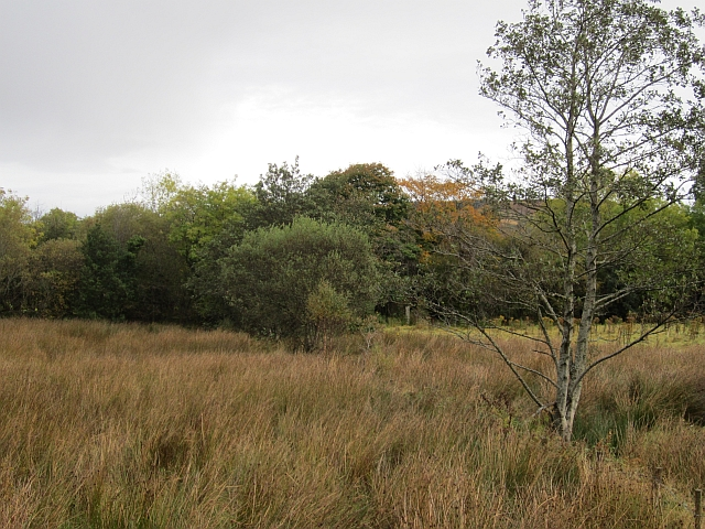 Wet pasture, Altnapaste