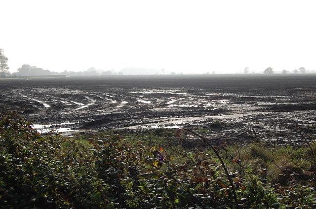Muddy Autumn Fields near Brenzett
