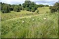 SP0830 : Rough grazing near Cutsdean by Graham Horn