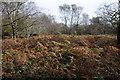 ST4493 : Bracken and birch by Philip Halling
