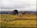 NY9072 : Haughton Pasture by David Dixon