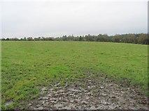 H1692 : Field, Drumavish by Richard Webb
