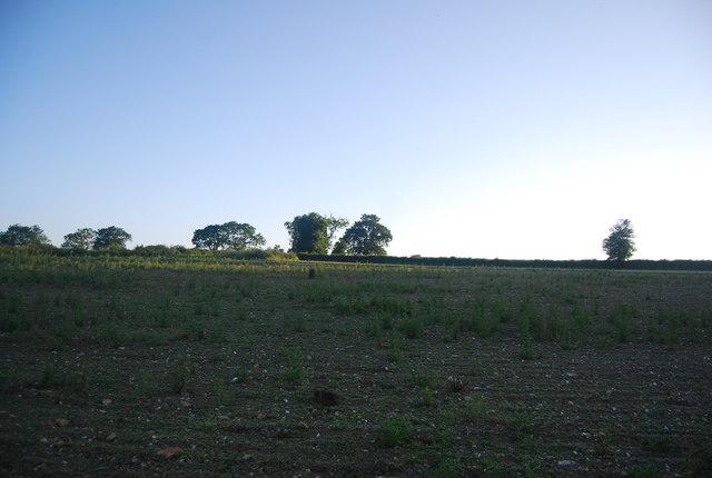 Farmland north of Watton Rd
