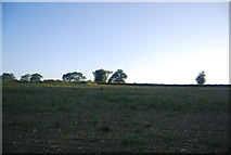 TG1407 : Farmland north of Watton Rd by N Chadwick