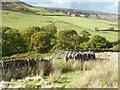 NZ6502 : Gate into High House's fields by Christine Johnstone