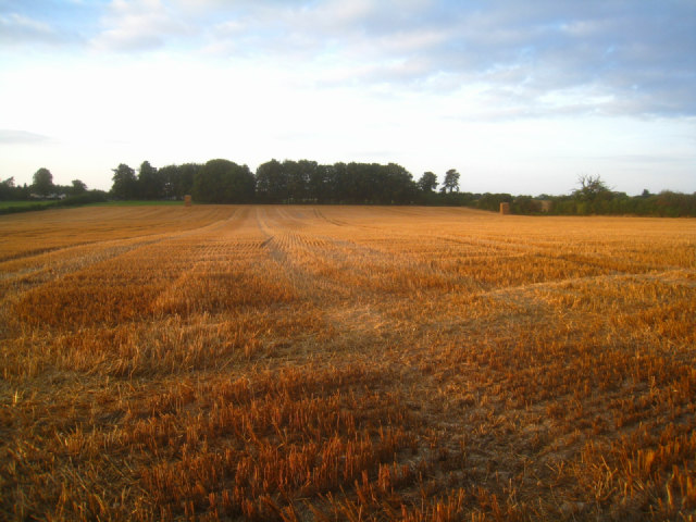 Harvested cereal crop by Sandy B