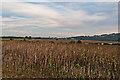 SO5077 : Towards Ludlow by Ian Capper