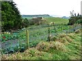 SE7097 : Well-protected vegetable garden, Low Baring by Christine Johnstone
