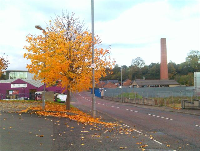 Colourful tree, Dungannon