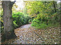 NZ0881 : Footpath in Bolam Lake Country Park by peter robinson