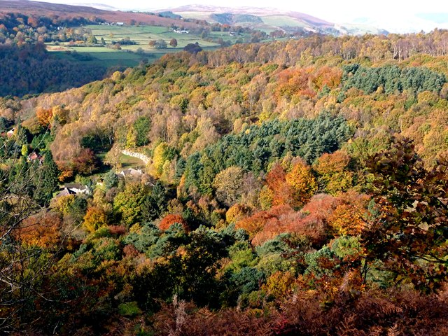 Autumn colour on Longshaw Estate