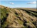 NT5131 : Cauldshiels Hill by Walter Baxter