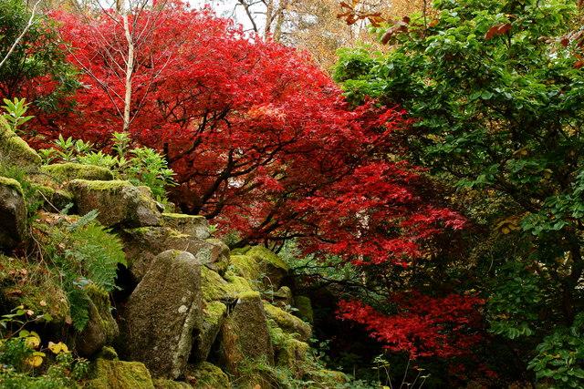 Japanese Garden, Giggle Alley, Eskdale, Cumbria