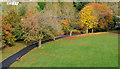 J4173 : Path, Moat Park, Dundonald by Albert Bridge