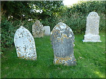 SY5697 : SS Andrew & Peter, Toller Porcorum: churchyard (4) by Basher Eyre