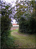 TM3775 : Footpath off the B1117 Halesworth Road by Adrian Cable