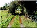 SO1739 : Wye Valley Walk, Glasbury by Jaggery