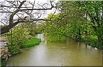 TF1309 : River Welland looking east, Market Deeping by P L Chadwick