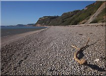 SY1687 : Beach near Weston Mouth by Derek Harper