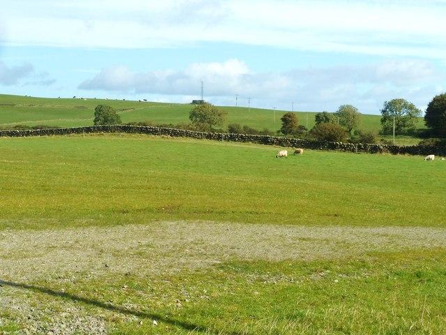 Looking east across the Wickerman field