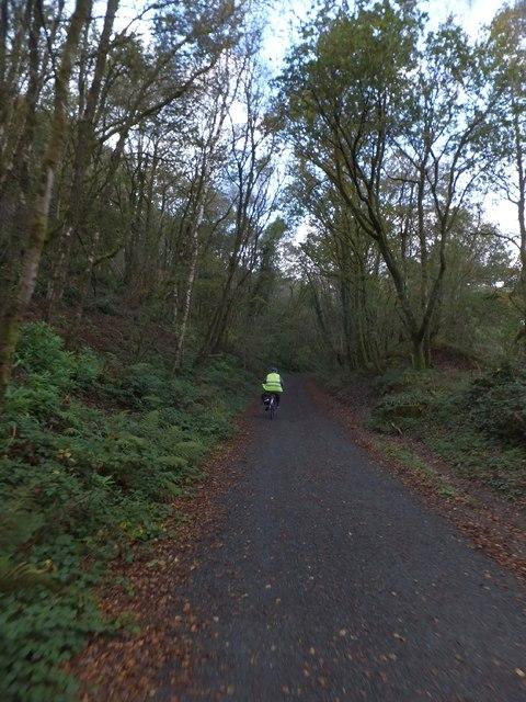 Drake's Trail in Sticklepath Wood
